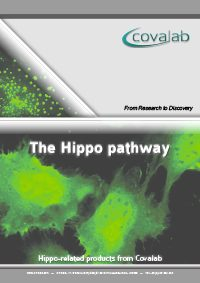 hippo_pathway
