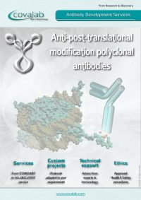 anti-ptm_antibody_development